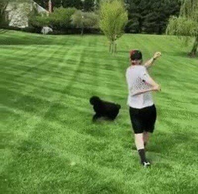 Enlace a Queda demostrado que este perro es listísimo