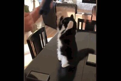 Enlace a El baile del gato te alegrará la mañana