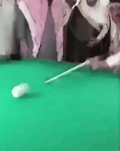 Enlace a Nadie ha visto nada, el jeque es el campeón del torneo