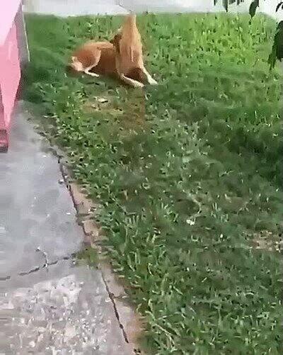 Enlace a ¿Quién dijo que gatos y perros no pueden ser amigos?