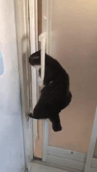 Enlace a Como pasas de mí, pues me abro yo mismo la puerta