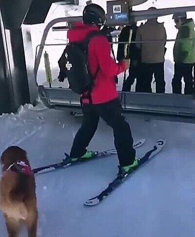 Enlace a Perros que también saben disfrutar de un día de nieve