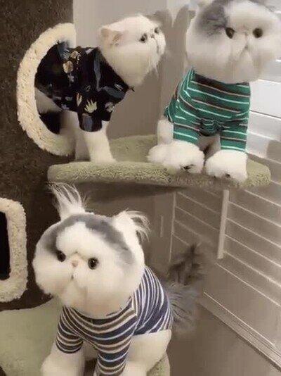 Enlace a Parecía un lindo gif de gatitos pero...