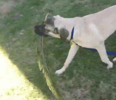 Este perro no necesita a nadie para ser feliz