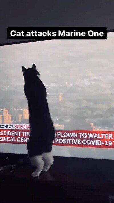Enlace a A este gato no le gustan los helicópteros