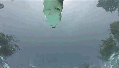 Enlace a Este perro nadando es lo más majestuoso que verás hoy