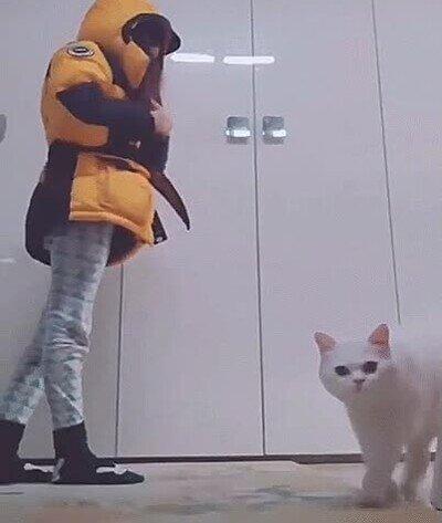 Enlace a El gato de esta chica es bastante presumido y quiere toda la atención