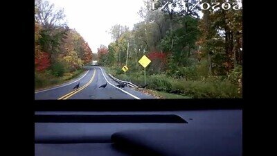 Enlace a Recuerda vigilar con ellos cuando conduzcas por la carretera