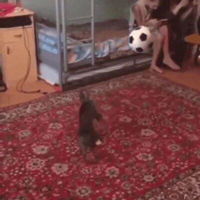 Enlace a Este gato fue un gran portero de fútbol en otra vida