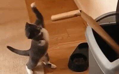 Enlace a Hay gatos que necesitan poco para distraerse