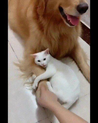 Enlace a ¿Quién dijo que perros y gatos no pueden ser amigos?