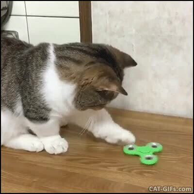 Enlace a Gato apasionado con su fidget spinner