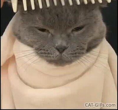 Enlace a Este gato nos representa a todos en el peluquero