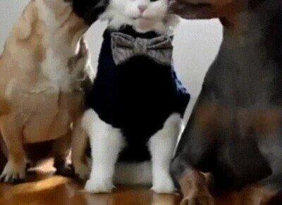 Enlace a Con razón este gato no tiene miedo de los perros