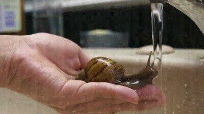Enlace a Para este simpático caracol ha llegado la hora del baño