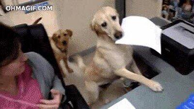 Enlace a Buen chico ayudando a mamá en el trabajo