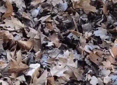 Enlace a Hay un depredador oculto entre todas esas hojas