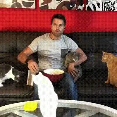 Enlace a El fin de semana para alguien soltero con gatos