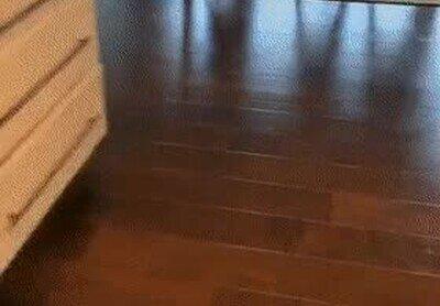 Enlace a Mi perro es lo menos disimulado del mundo