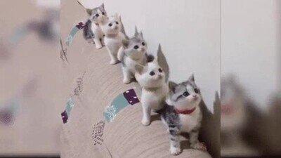 Enlace a 5 gatitos mirando un partido de tenis
