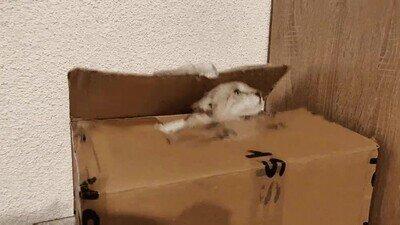 Enlace a ¿Qué pensabas que había dentro de la caja?