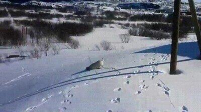 Enlace a La prueba de que los perros se lo pasan en grande en la nieve
