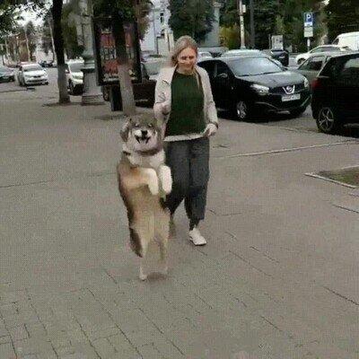 Enlace a Perros que se creen un canguro