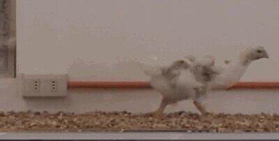 Enlace a Si les pones una cola son como pequeños dinosaurios