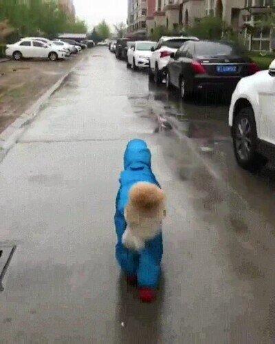 Enlace a El perro más contento del mundo con un chubasquero mientras llueve