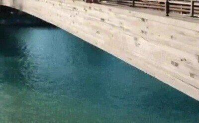 Enlace a Impresionante backflip en el agua
