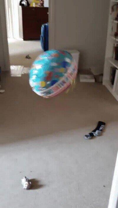 Enlace a Un perro solo necesita un globo para ser feliz
