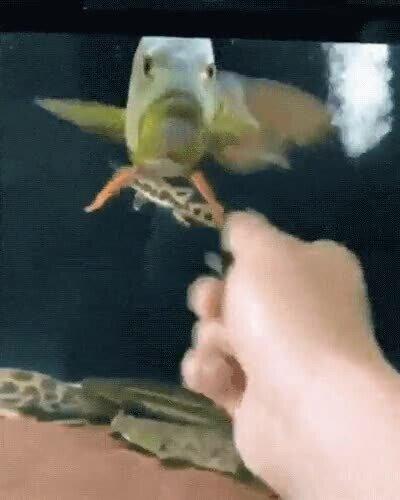 Enlace a Cómo cabrear a un pez con un simple movimiento