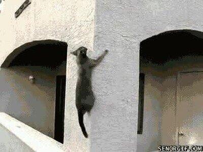 Enlace a Este gato ha jugado mucho a Assassin's Creed