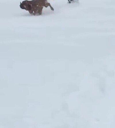 Enlace a Perros felices jugando en la nieve
