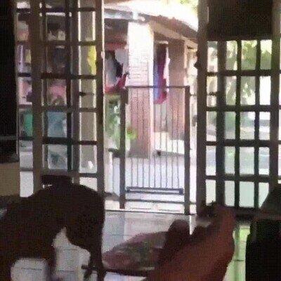 Enlace a Un perro que salta obstáculos imposibles