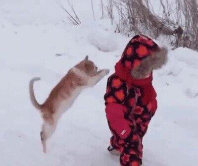 Enlace a Un gato que parece una estrella de la WWE