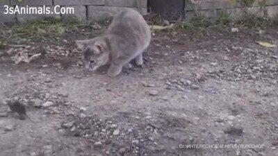 Enlace a Este gato es la vergüenza de los gatos