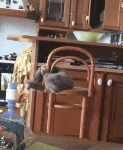 Enlace a Algunos gatos son más listos que otros...