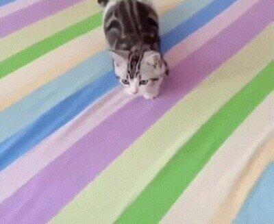 Enlace a Ataque gatuno sincronizado