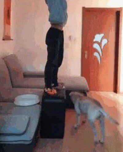 Enlace a Un perro que ayuda a su dueño a cambiar la lámapra