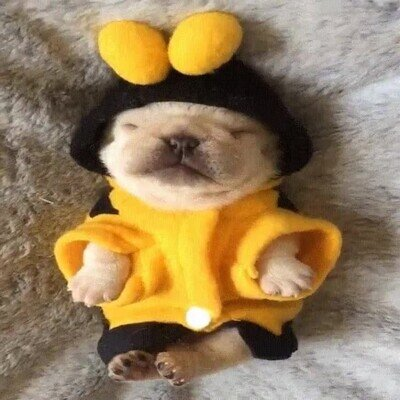 Enlace a El cachorro más adorable del mundo