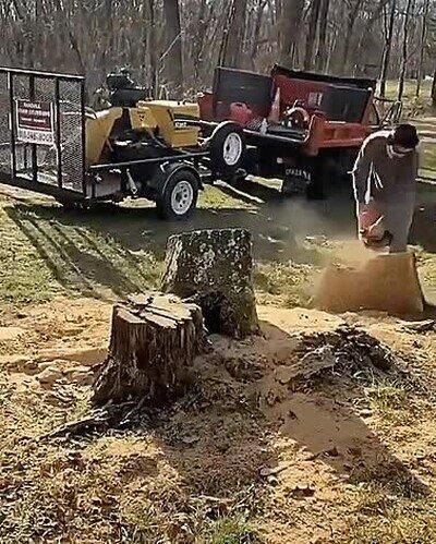 Enlace a Time lapse del proceso de retirada de un árbol