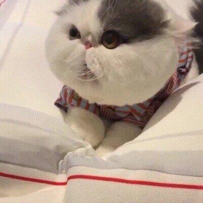 Enlace a El gato más adorable del mundo