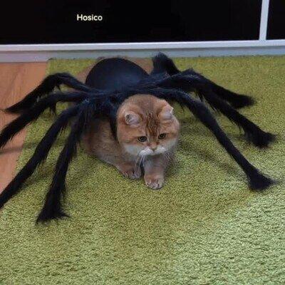 Enlace a El primer gato araña de la historia