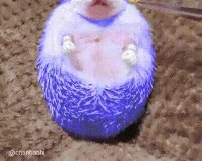 Enlace a Cuando le acercas un anillo a Sonic