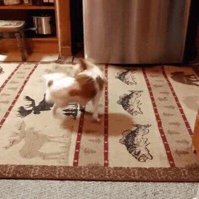 Enlace a Un mini tornado creado por un perro
