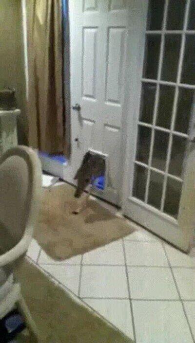 Enlace a Se supone que eso era para el gato