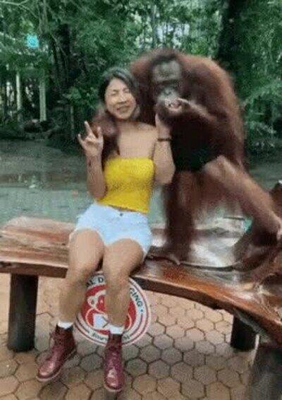 Enlace a Un orangután que está bastante salido