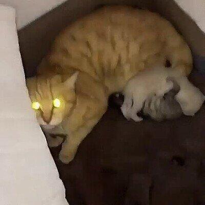 Enlace a Un gato con bastante mala leche
