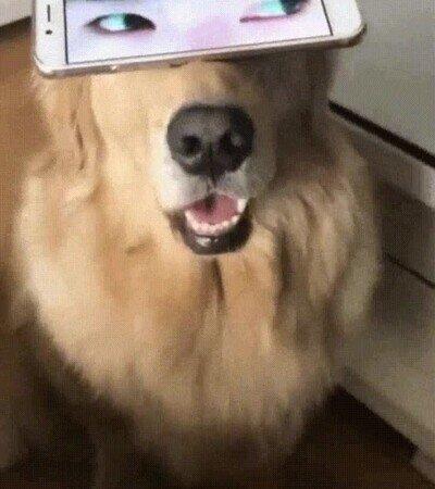 Enlace a Da mal rollo cuando le pones un par de ojos humanos a tu perro